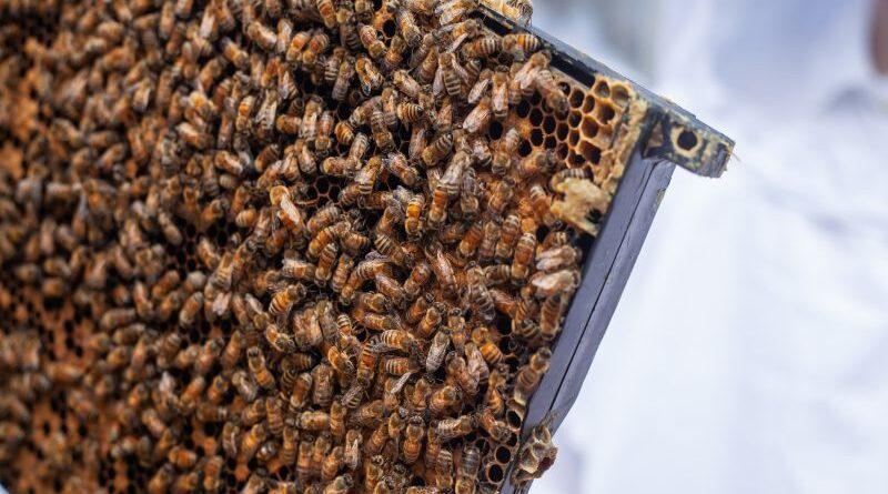 biavler i haven