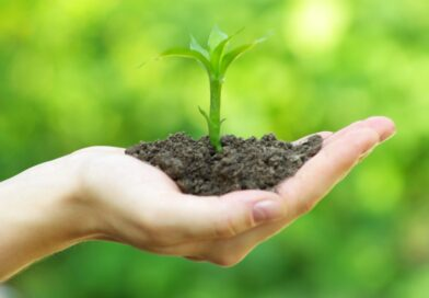 Plant dine egne planter