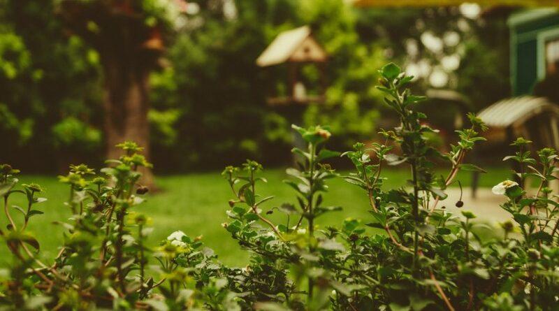 Sådan får du den smukkeste have