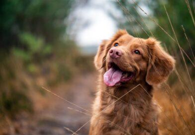 Hunden er menneskes bedste ven - Et familiemedlem i dit hus og have